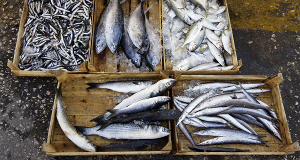 Russia imposes restrictions on import of fish products from Poland
