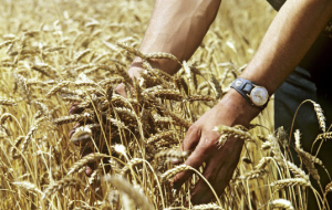 Ukraine sends to Asia 47% of exports of agricultural products