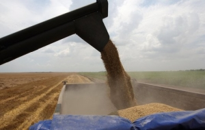 Leningrad region exceeded the plan to raise the grain on the third