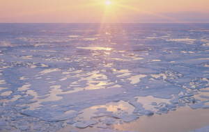 USA refused from renting out plots on the Arctic shelf