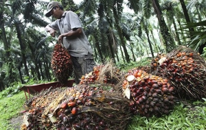 "The Ministry of agriculture ""declared war on"" palm-oil"