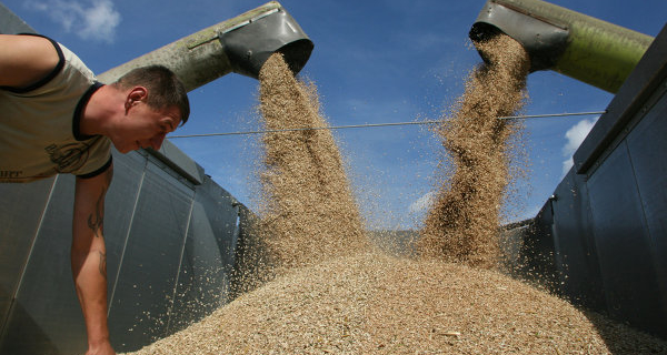 Russia for October 7, reduced wheat exports by 25%