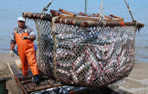 Putin instructed to create a Commission on development of the fisheries sector