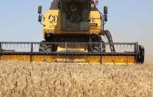 Ukraine will sell abroad more than half of the grain harvest 2015