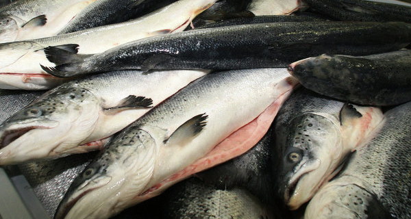 Putin is waiting for proposals to ban state purchases of imported fish