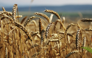 The index of agricultural production in the Tambov region was 107%