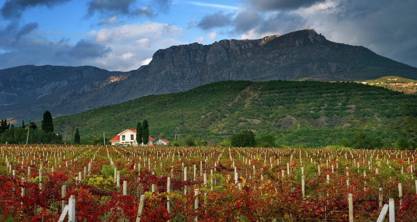 The Ministry of agriculture of the Crimea: a third of the harvest is lost due to the weather