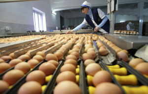 King poultry farm will produce 10 thousand eggs with selenium daily