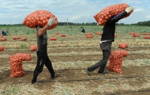 The Rosselkhoznadzor may prohibit the importation of fruits and vegetables through Belarus