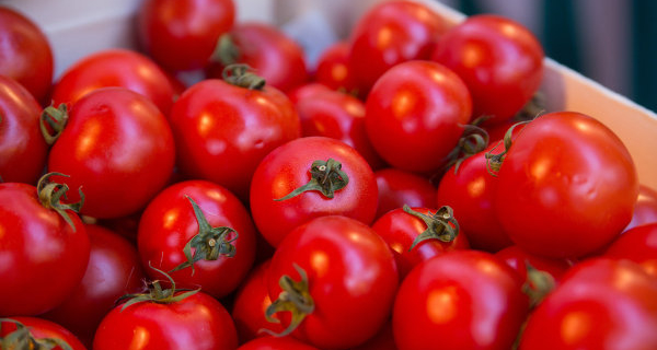 MAYOR: the price of cucumbers and tomatoes grow before the ban of imports from Turkey