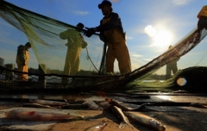 Japan will include $82 million in additional budget due to the prohibition in the Russian drift net fishing