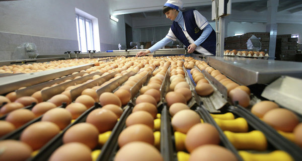 Omsk pticeprom 6-9% increased the production of poultry meat and eggs