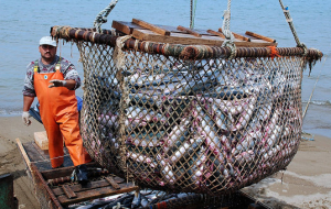 The government of the Russian Federation may establish the Commission on fisheries management issues