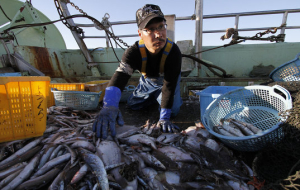The Cabinet of Ministers approved the national plan against illegal fishing