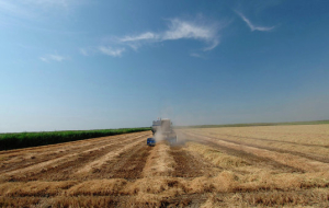 Kuban earned a platform for trading agricultural products