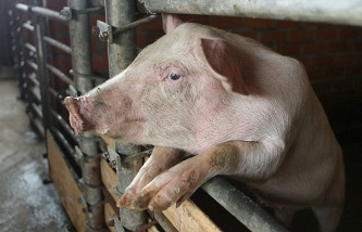Belarus has restricted pork imports from Crimea due to the outbreak of ASF