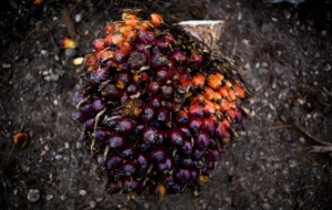 Four ministries supported the introduction of excise duties on palm oil