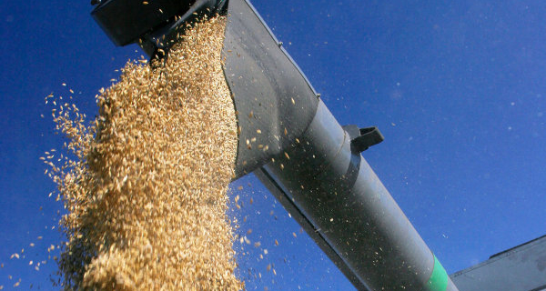Egypt asks Russia for a reduced price and a loan of wheat