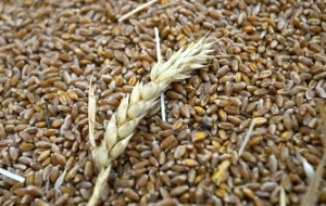 Russia continues buying grain in the state Fund already purchased 1.6 million tons of