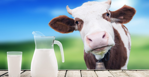 "Milk production in 2016, predicted a dip below the ""psychological"" level"