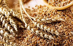 The agriculture Ministry has proposed to cancel export duty on wheat