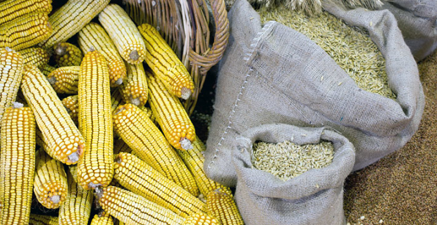 Vietnam has shifted Turkey from the second place on volume of purchases of Russian grain