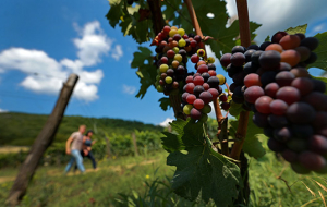 The Italian company has denied the application for a wine Dimon in Russia