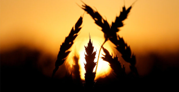 Turkey lifted restrictions on the import of Russian wheat
